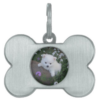 American Eskimo Puppy Dog Pet Name Tag