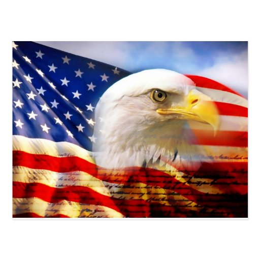 American Flag Bald Eagle Postcard