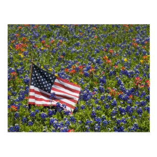 American Flag in field of Blue Bonnets, 2 Postcard