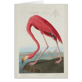 American Flamingo by J. J. Audubon Card
