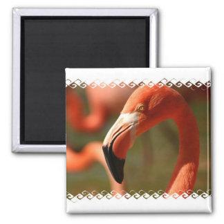 American Flamingo Square Magnet