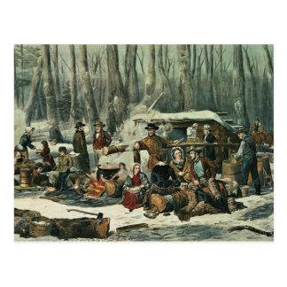 American Forest Scene - Maple Sugaring, 1856 Postcard