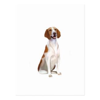 American Foxhound (A) Postcard