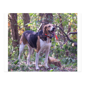 American Foxhound full hunting.png Postcard