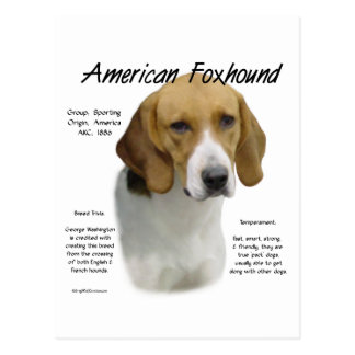 American Foxhound History Design Postcard