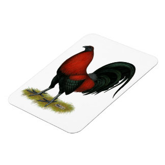 American Game BB Black Red Rooster Rectangular Photo Magnet
