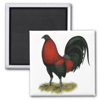 American Game BB Black Red Rooster Square Magnet