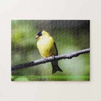 American Goldfinch Bird Puzzle