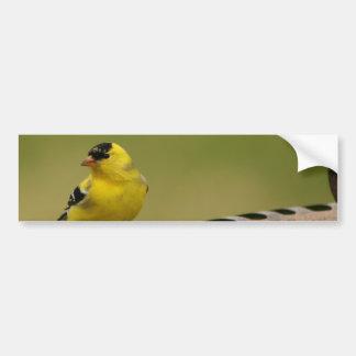 American Goldfinch Bumper Sticker