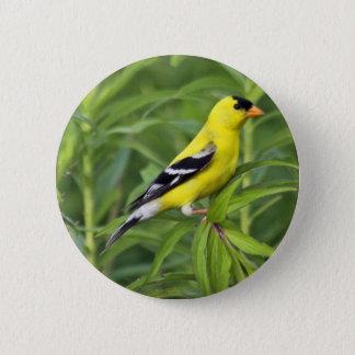 American Goldfinch Button