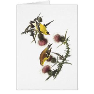 American Goldfinch by Audubon Card