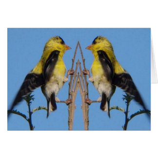 American Goldfinch Card