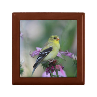 American goldfinch - female trinket box