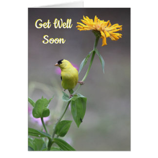 American Goldfinch Get Well Card 24
