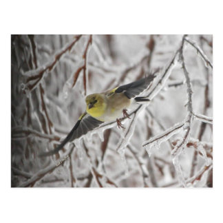 American Goldfinch in Flight Postcard