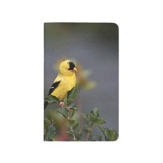 American goldfinch in the garden journals