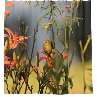 American goldfinch in the garden with day lilies