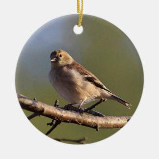 American goldfinch in winter plumage round ceramic ornament