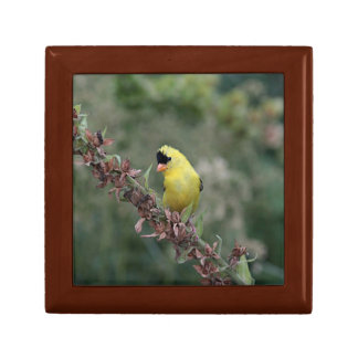 American goldfinch jewelry box