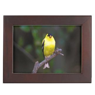 American Goldfinch keepsake box