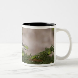 American Goldfinch male in a tree Two-Tone Coffee Mug