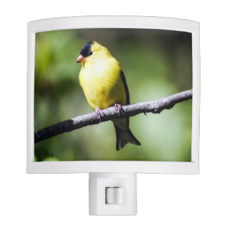 American Goldfinch Night Light