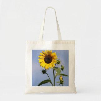 American Goldfinch on Sunflower