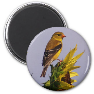 American Goldfinch on Sunflower Magnet