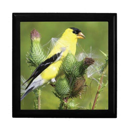 American Goldfinch Photograph Gift Box