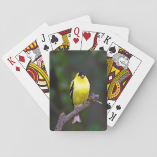 American Goldfinch playing cards