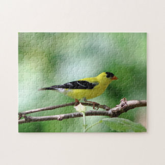 American Goldfinch, Puzzle
