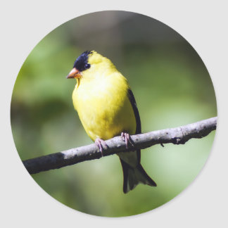 American Goldfinch Round Sticker