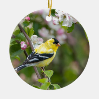 American Goldfinch with spring apple blossoms Round Ceramic Ornament