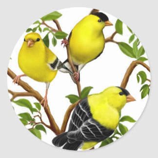 American Goldfinches in Vines Sticker