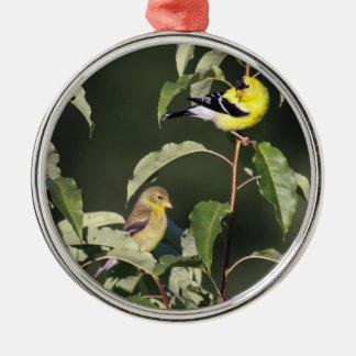 American Goldfinches Silver-Colored Round Ornament