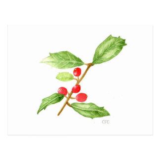American Holly (Ilex opaca) Postcard