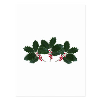 American Holly Leaves - Berries Postcard