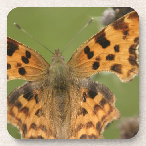 American Lady Butterfly Cork Coasters