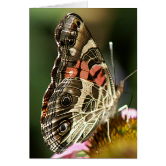 American Lady Butterfly Greeting Card. Greeting Card