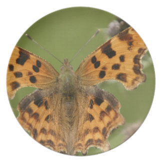 American Lady Butterfly Plate