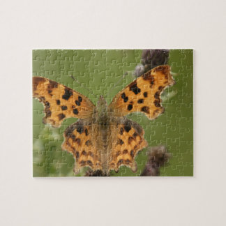 American Lady Butterfly Puzzle