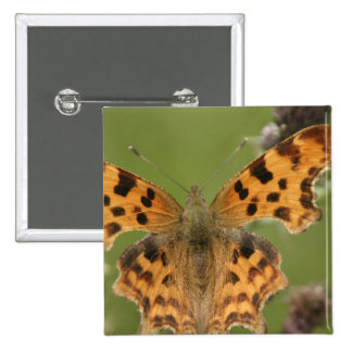 American Lady Butterfly Square Pin