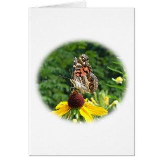 American Lady Butterfly - Vanessa virginiensis Card