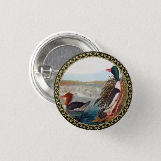 American mallard ducks in a river swimming 1 inch round button