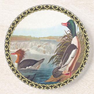 American mallard ducks in a river swimming coaster
