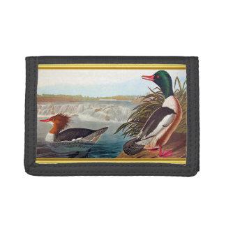 American mallard ducks in a river swimming trifold wallets