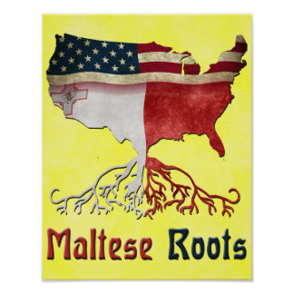 American Maltese Roots Poster Print
