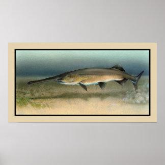 American (Mississippi) Paddlefish Poster
