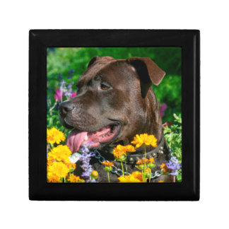 American Pit Bull in field of flowers Trinket Box