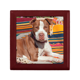 American Pit Bull lying on blankets Trinket Box